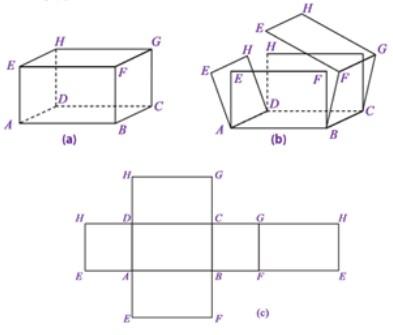 cara membuat jaring balok