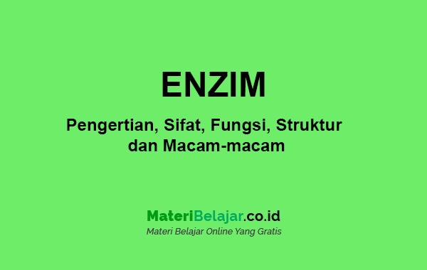 pengertian enzim