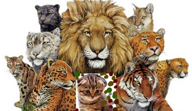 spesies felidae