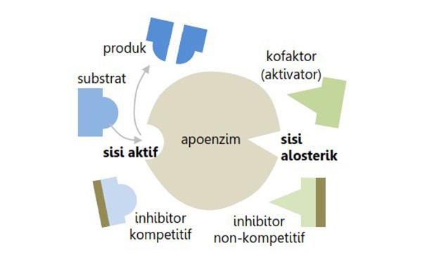 struktur enzim