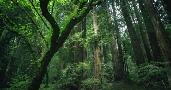 Hutan Asli (Hutan Alam)