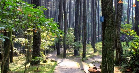 Hutan Buatan