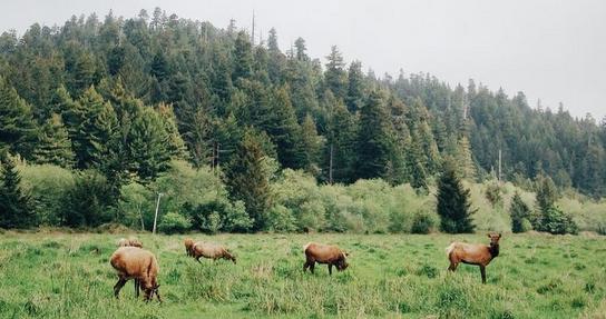 Hutan Suaka Alam