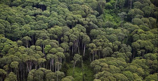 Hutan heterogen