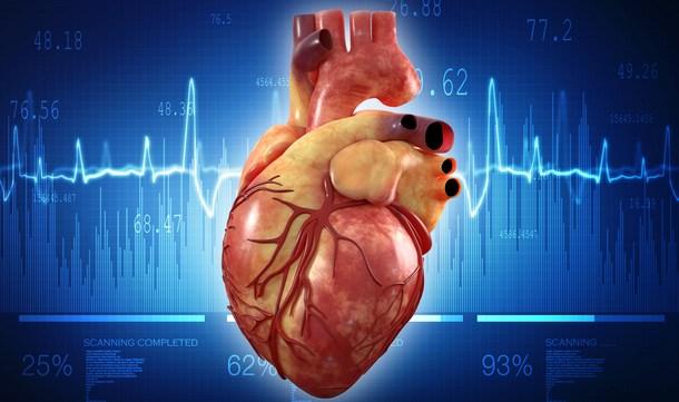 41+ Gambar Jantung Hewan Vertebrata Terbaik