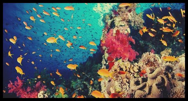 Ekosistem Air (Akuatik)