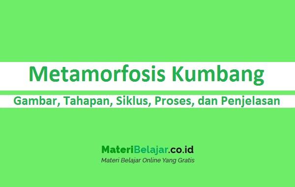 Metamorfosis Kumbang