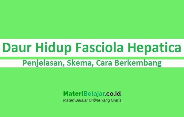 daur hidup fasciola hepatica
