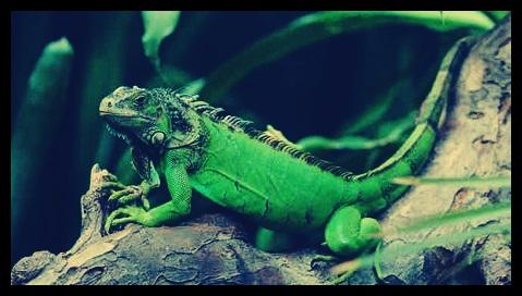 90+ Gambar Hewan Reptil Beserta Namanya Terbaik