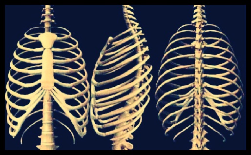 Struktur tulang rusuk