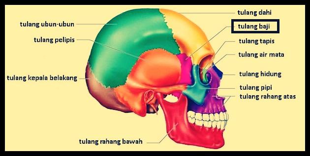 Tulang Baji
