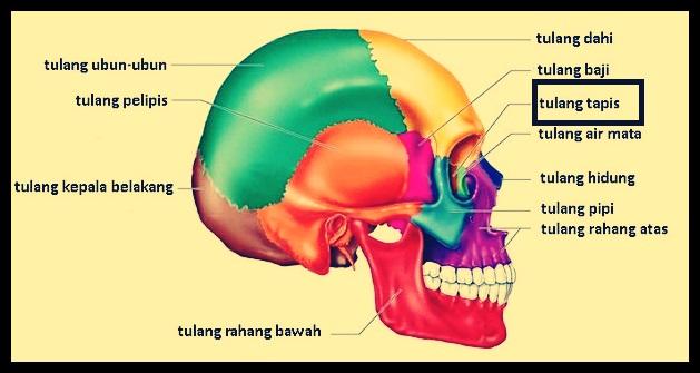 Tulang Tapis