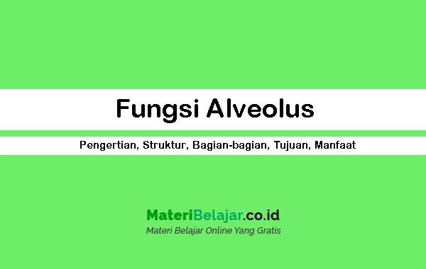 Fungsi Alveolus