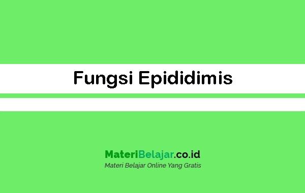 Fungsi Epididimis