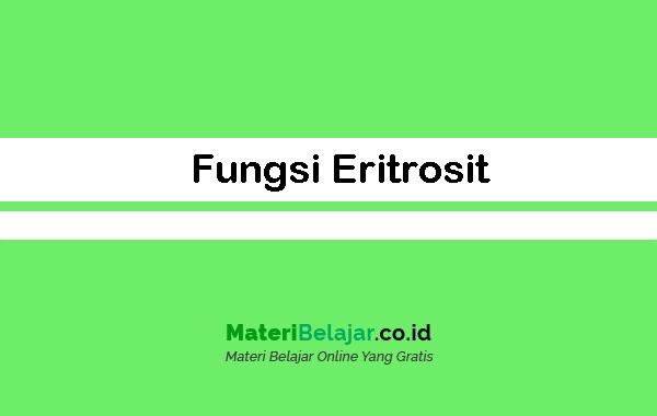 Fungsi Eritrosit