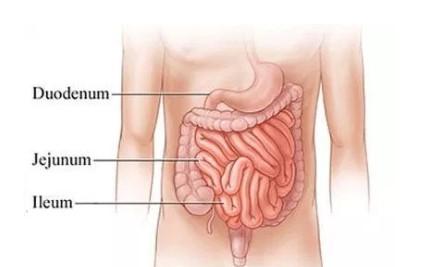 Pencernakan-pada-usus-halus
