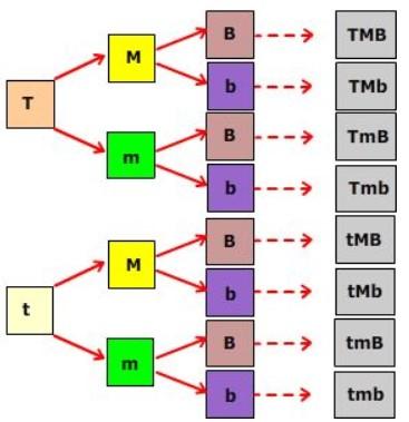 contoh-persilngan3