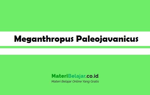 pengertian meganthropus paleojavanicus
