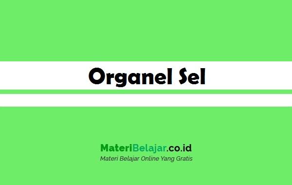 organel sel tumbuhan dan fungsinya