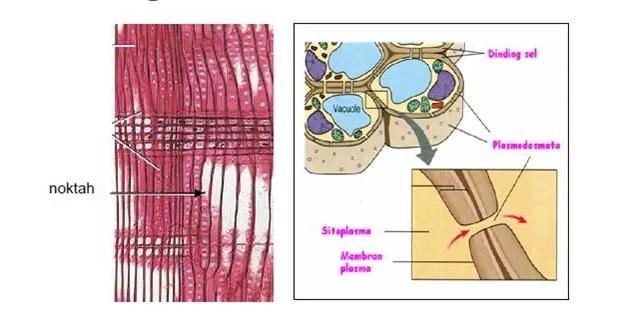 gambar dinding sel